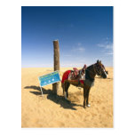 Tunisia, Ksour Area, Ksar Ghilane, horse in the Post Card