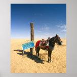 Tunisia, Ksour Area, Ksar Ghilane, horse in the Posters