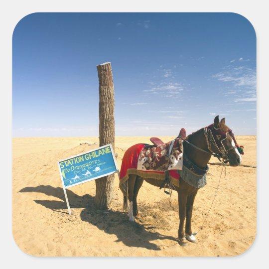 Tunisia, Ksour Area, Ksar Ghilane, horse in the Square Sticker