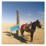 Tunisia, Ksour Area, Ksar Ghilane, horse in the Ceramic Tiles