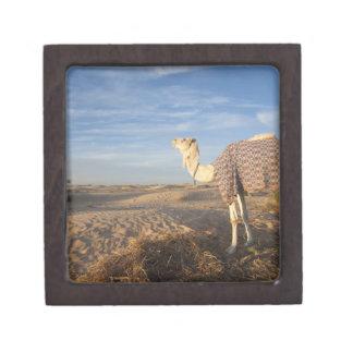 Tunisia, Sahara Desert, Douz, Great Dune, camel, Premium Jewelry Box