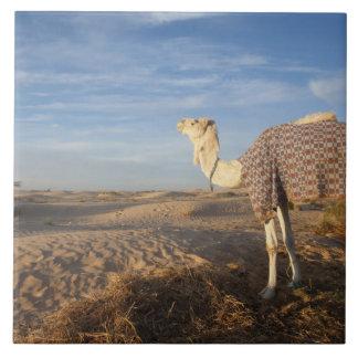 Tunisia, Sahara Desert, Douz, Great Dune, camel, Tile