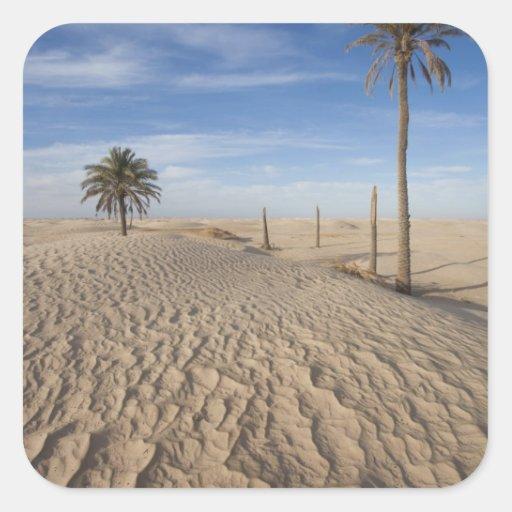 Tunisia, Sahara Desert, Douz, Great Dune, dawn Square Stickers