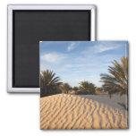 Tunisia, Sahara Desert, Douz, Great Dune, palm 2 2 Inch Square Magnet