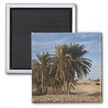 Tunisia, Sahara Desert, Douz, Great Dune, palm 2 Inch Square Magnet