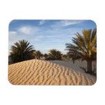 Tunisia, Sahara Desert, Douz, Great Dune, palm 2 Magnet