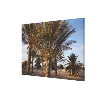 Tunisia, Sahara Desert, Douz, Great Dune, palm Canvas Print