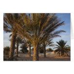 Tunisia, Sahara Desert, Douz, Great Dune, palm Cards
