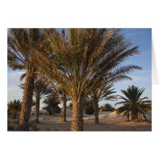 Tunisia, Sahara Desert, Douz, Great Dune, palm Card