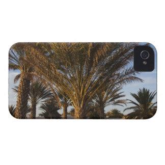 Tunisia, Sahara Desert, Douz, Great Dune, palm iPhone 4 Cover
