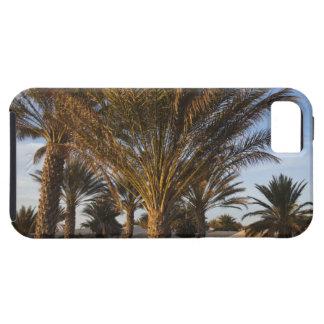 Tunisia, Sahara Desert, Douz, Great Dune, palm iPhone SE/5/5s Case