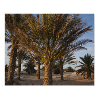 Tunisia, Sahara Desert, Douz, Great Dune, palm Print