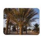 Tunisia, Sahara Desert, Douz, Great Dune, palm Flexible Magnets