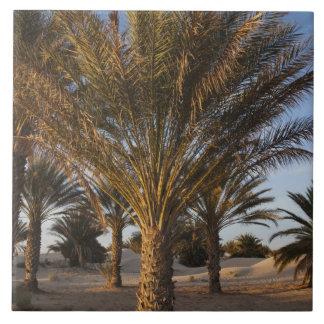 Tunisia, Sahara Desert, Douz, Great Dune, palm Tiles