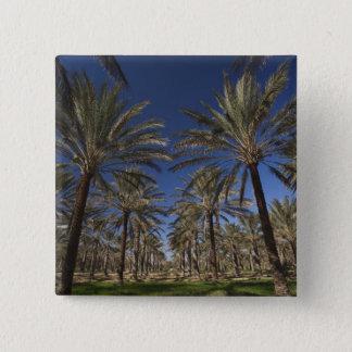 Tunisia, Sahara Desert, Douz, Zone Touristique, 2 Button