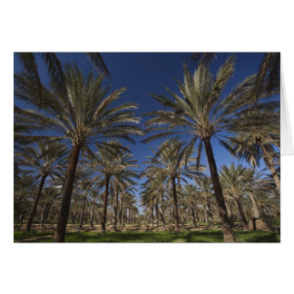 Tunisia, Sahara Desert, Douz, Zone Touristique, 2 Greeting Card