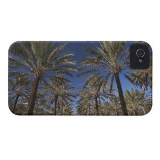 Tunisia, Sahara Desert, Douz, Zone Touristique, 2 iPhone 4 Case
