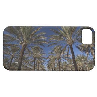 Tunisia, Sahara Desert, Douz, Zone Touristique, 2 iPhone SE/5/5s Case