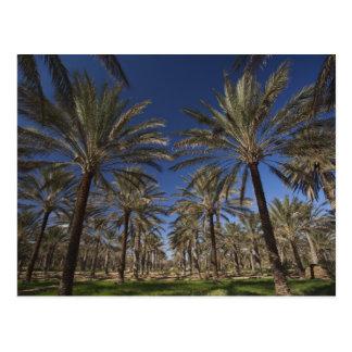 Tunisia, Sahara Desert, Douz, Zone Touristique, 2 Postcard