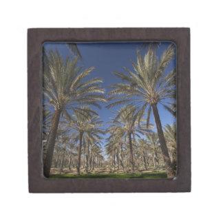 Tunisia, Sahara Desert, Douz, Zone Touristique, 2 Premium Keepsake Box