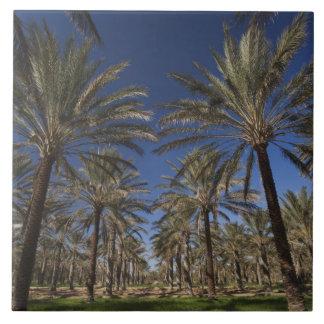 Tunisia, Sahara Desert, Douz, Zone Touristique, 2 Ceramic Tile