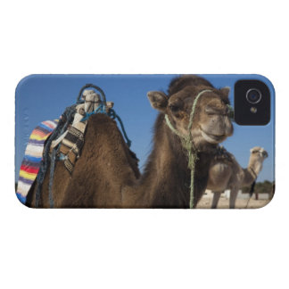 Tunisia, Sahara Desert, Douz, Zone Touristique, Case-Mate iPhone 4 Case