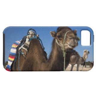 Tunisia, Sahara Desert, Douz, Zone Touristique, iPhone SE/5/5s Case