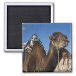 Tunisia, Sahara Desert, Douz, Zone Touristique, Refrigerator Magnet