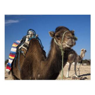 Tunisia, Sahara Desert, Douz, Zone Touristique, Postcard