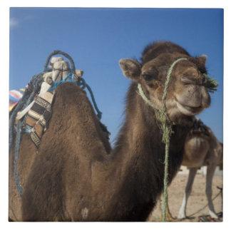 Tunisia, Sahara Desert, Douz, Zone Touristique, Tile