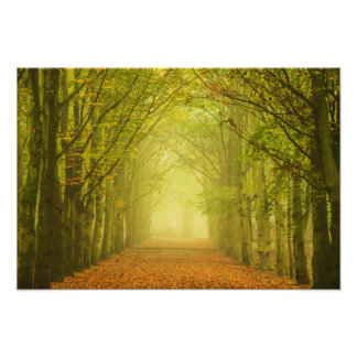 Tunnel of light in the forest photo print
