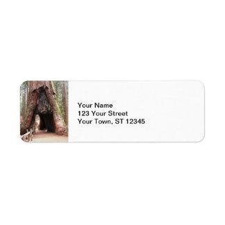 Tunnel Tree- Yosemite Label