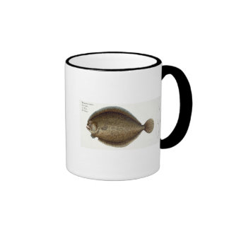 Turbot (Pleuronectes Maximus) plate XLIX from 'Ich Ringer Coffee Mug