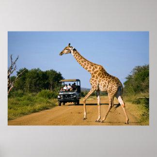 Turistas que miran la jirafa póster