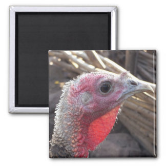 turkey 2 inch square magnet