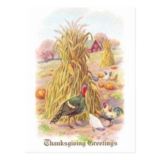 Turkey and Flock of Chickens Vintage Thanksgiving Postcard