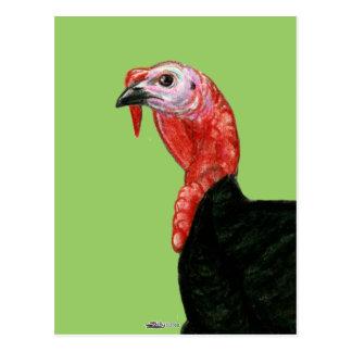 Turkey:  Black Tom Head Postcard