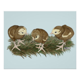 Turkey Chocolate Poults Poster