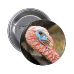 Turkey Close-Up Buttons