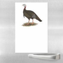 Turkey:  Eastern Wild Tom Magnetic Dry Erase Sheet