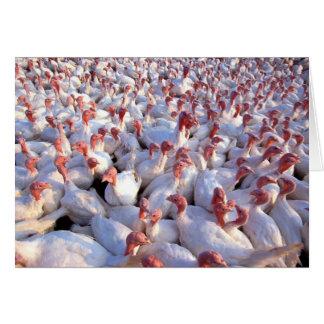 Turkey Farm Card