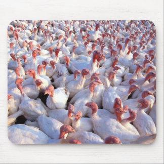 Turkey Farm Mouse Pads