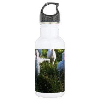 Turkey Flock 18oz Water Bottle