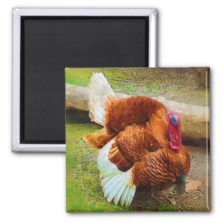Turkey Gobbler 2 Inch Square Magnet
