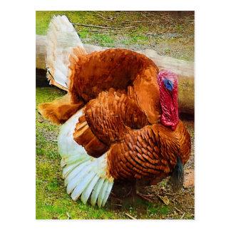 Turkey Gobbler Postcard