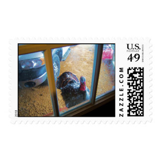 Turkey looking in door postage