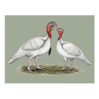 Turkey Mini Whites Postcard