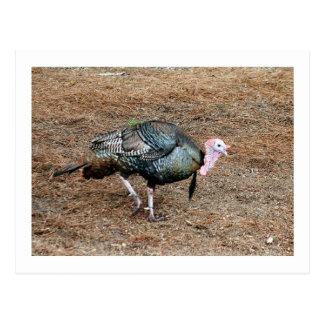 Turkey Photo Postcard