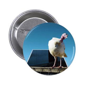 Turkey Popout Art, Button
