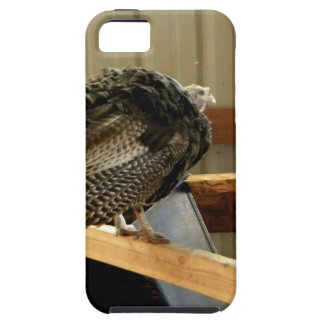 Turkey Post iPhone SE/5/5s Case
